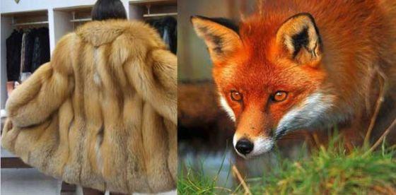 В Сан-Франциско запретили продавать мех животных