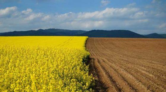 Канада инвестирует 150 миллионов долларов в растениеводство