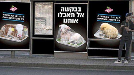 В Израиле проходит мощная кампания в защиту животных  ко  Дню независимости