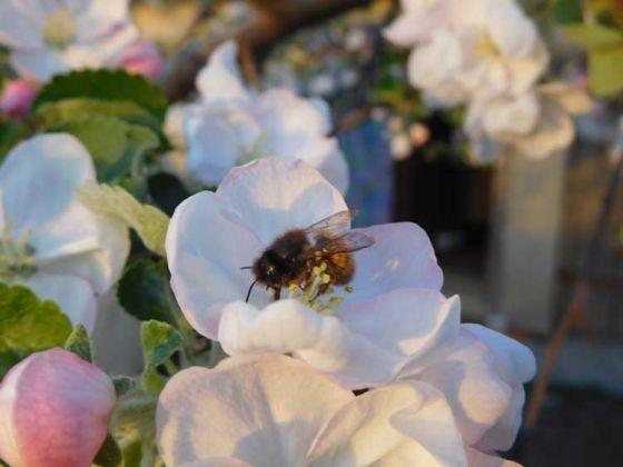 В Евросоюзе запретили пестициды, убивающие пчел