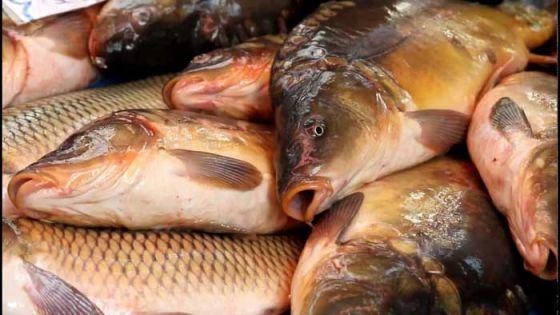 Ученые  опровергли миф  о пользе рыбьего жира