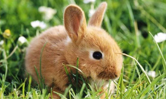 В Калифорнии хотят запретить продажу косметики, тестируемой на животных