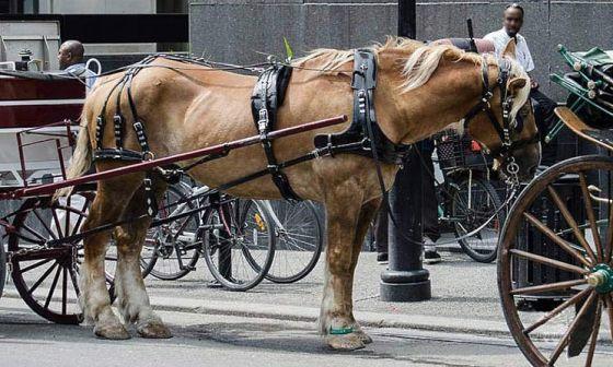 В Монреале запретят конные экипажи с 2020 года