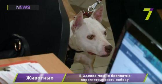 В Одессе можно бесплатно зарегистрировать собаку