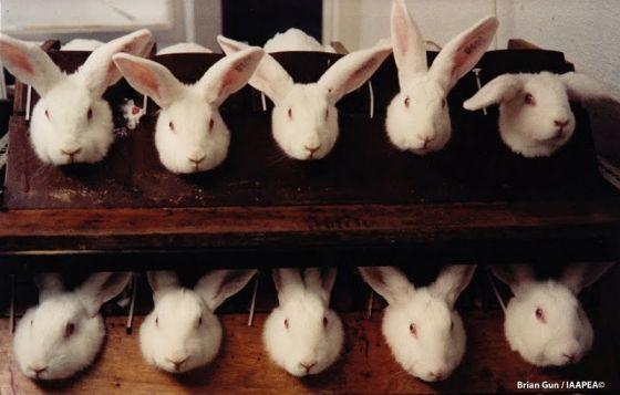 В Калифорнии запретили продажу косметики, тестируемой на животных