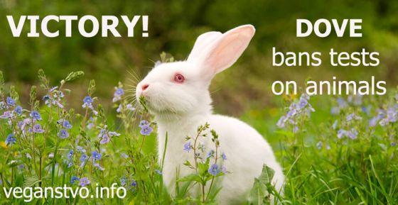 Победа: Dove  запретил  тестирование продукции на животных