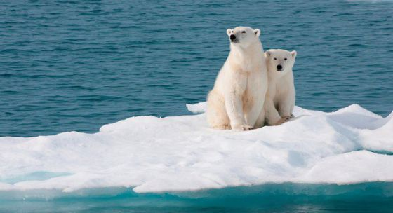 ООН: у нас есть  12 лет, чтобы остановить изменение климата