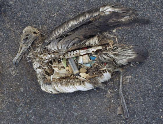 В Европе запретили пластиковую посуду и другие одноразовые предметы из пластика