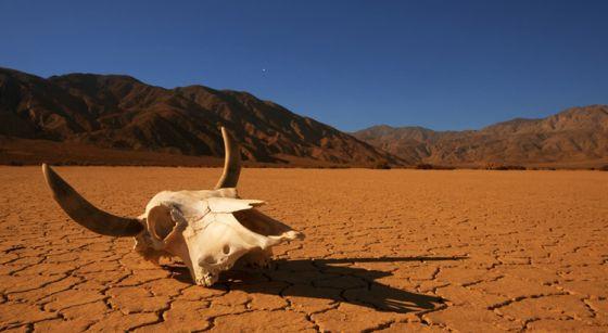 С 1970 года человек уничтожил 60% животных на Земле