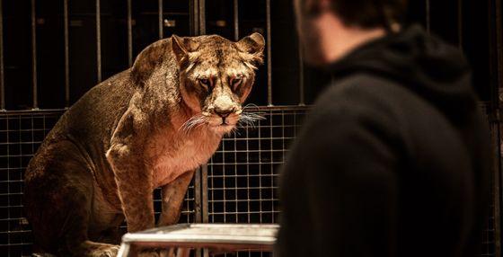 В Португалии запретили эксплуатацию  диких животных в цирках