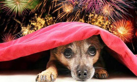 Фейерверки  опасны для домашних и диких животных