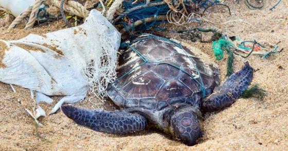 Рыболовные сети составляют  46 % от всего мусора в Мировом океане