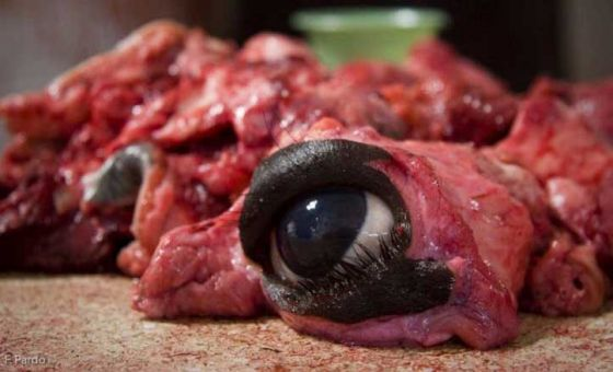Учёные: налоги на мясо могут спасти   220 000 жизней