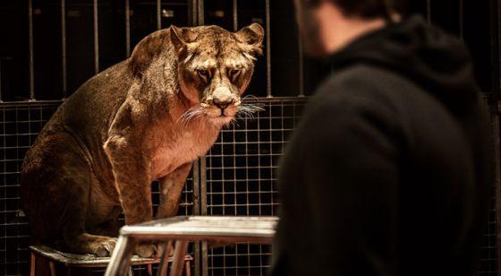 В Нью-Джерси запретили цирки  с дикими  животными