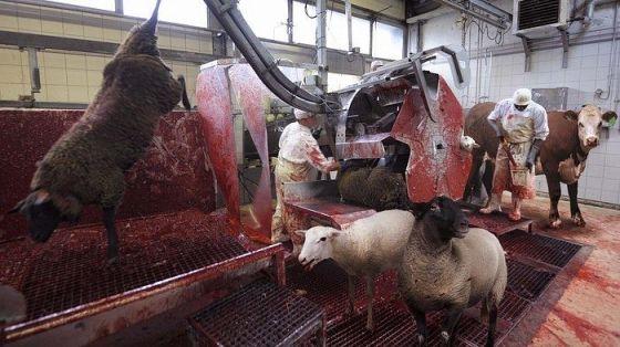 В Великобритании запущена петиция с требованием размещать изображения со скотобоен на упаковках с мясом