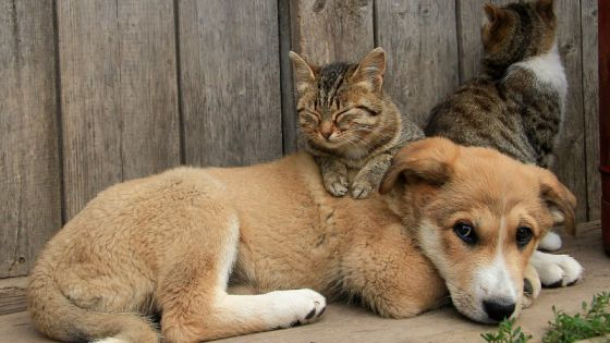 В России  принят  закон «Об ответственном обращении с животными»