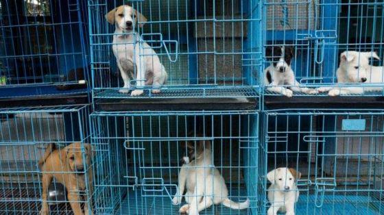 В Калифорнийских зоомагазинах   запретили  продажу  животных  от заводчиков