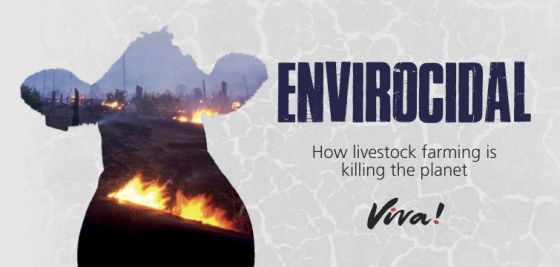 Животноводство убивает планету:  Viva! опубликовала  новый отчёт об  экологических проблемах