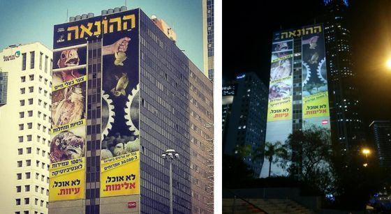 Израильские активисты вывесили огромный  баннер о жестокости   яичной и бройлерной  индустрии