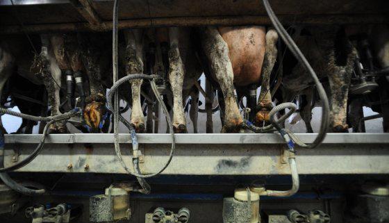 Продажи молока  в  Америке   упали на 1,1 млрд  долларов в 2018 году