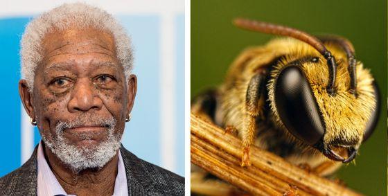 Актёр Морган Фриман превратил своё ранчо в заповедник  для пчёл