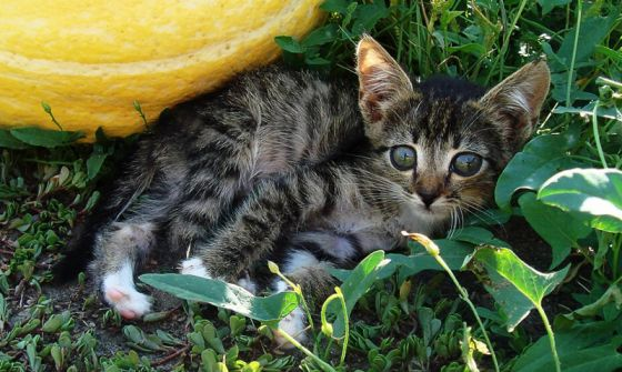 «Чистое мясо» для  кошек и собак появится в продаже уже в  начале следующего года