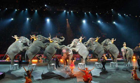 Словакия  запретила  использование   диких животных в цирке