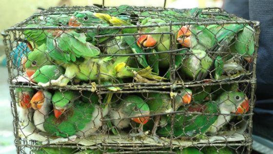 В Индии было спасено более  500 птиц