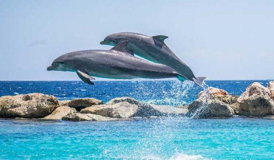 В Канаде запрещают  содержание  китообразных в неволе