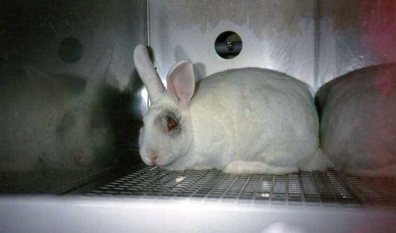 В Неваде запретили продажу  косметики, тестированной на животных