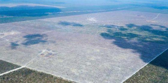 Вырубка  лесов  Амазонки  выросла на 60%  до  полутора  футбольного поля  в минуту