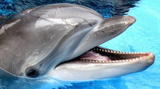 TripAdvisor запретил продажу билетов в парки развлечений с китообразными
