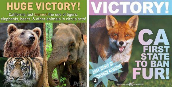 В Калифорнии запретили  продажу меховых изделий и цирки с животными