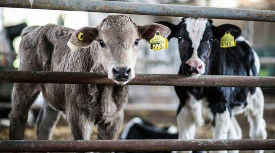 Мэры  14 крупных городов обязались  сократить потребление мяса