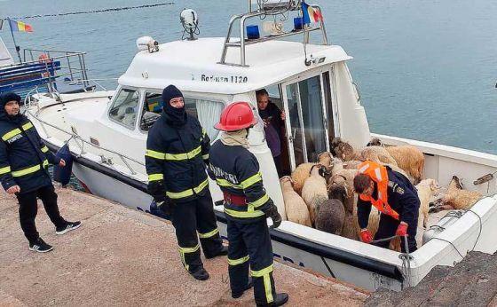 «Корабль смерти»: более  14 тысяч овец утонули в Чёрном море