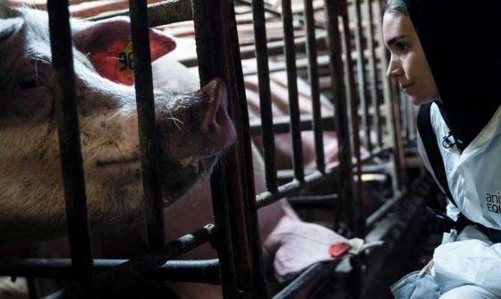 Руни Мара приняла участие в тайном расследовании на фермах: фото, видео