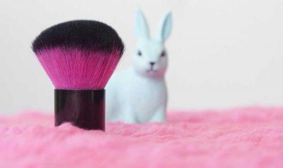 Сенат Мексики проголосовал за запрет тестирования косметики на животных