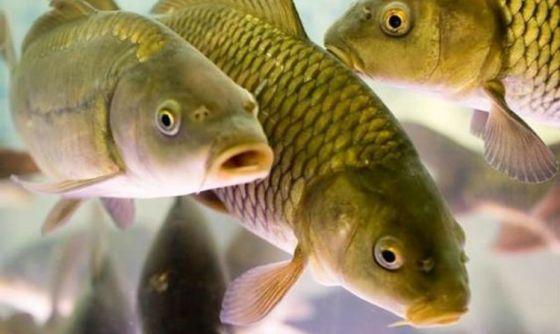 Почему есть рыбу вредно и неэтично